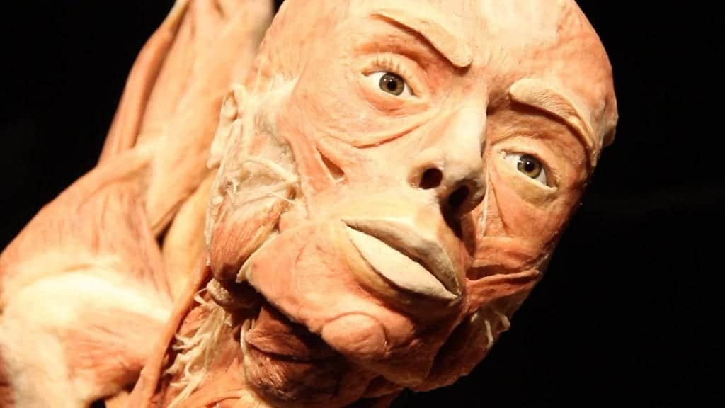 Bodies: The Exhibition - Fun Things to do in Las Vegas with Kids
