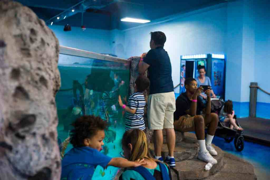 Seaquest Interactive Aquarium - Kids Activities in Vegas
