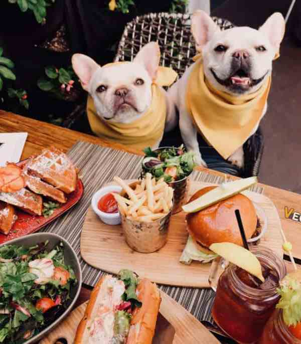 Best Pet-Friendly Restaurants in Las Vegas