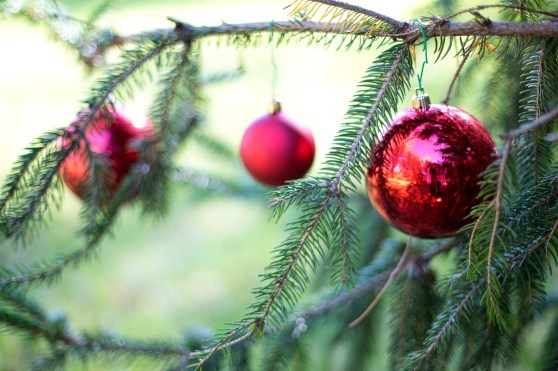 Christmas Tree branch with red holiday bulbs hanging