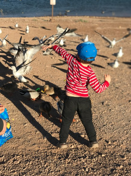 Small boy feeding seagulls on the beach at Lake Mead