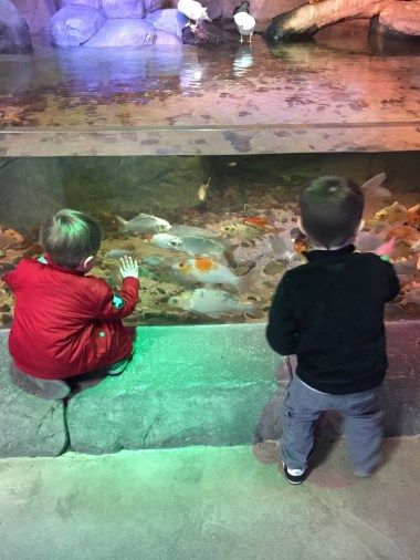 Two small boys looking through the glass of the aquarium at the fish swimming