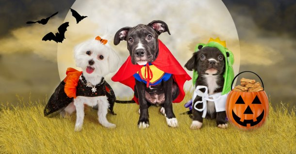 dogs in halloween costumes with treat bucket, in front of moon