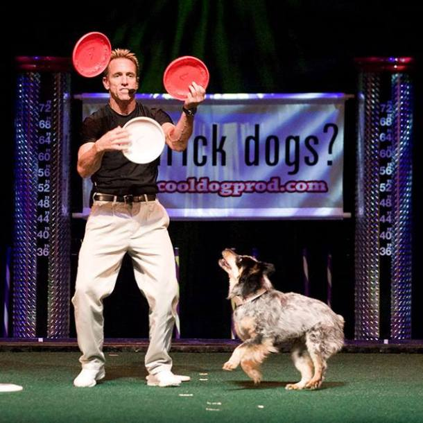 Springs Preserve events trick dog show, dog and frisbees