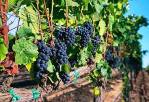 Ferraro's to Showcase Acclaimed Clarice Wine Company at One-Night-Only Dinner, Aug. 22