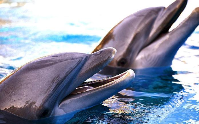Siegfried & Roy's Secret Garden and Dolphin Habitat Celebrates Veterans with Special Offer