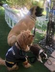"""""""Dog Bow Vow"""" Commitment Ceremony - National Dog Week"""