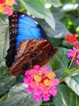 Fall Butterfly Habitat Flutters Back to the Springs Preserve; Seasonal Habitat Opens Daily from 10 A.M. – 3 P.M. Starting September 14