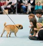 """The Animal Foundation's 12th Annual """"Best in Show"""" at Orleans Arena April 26"""