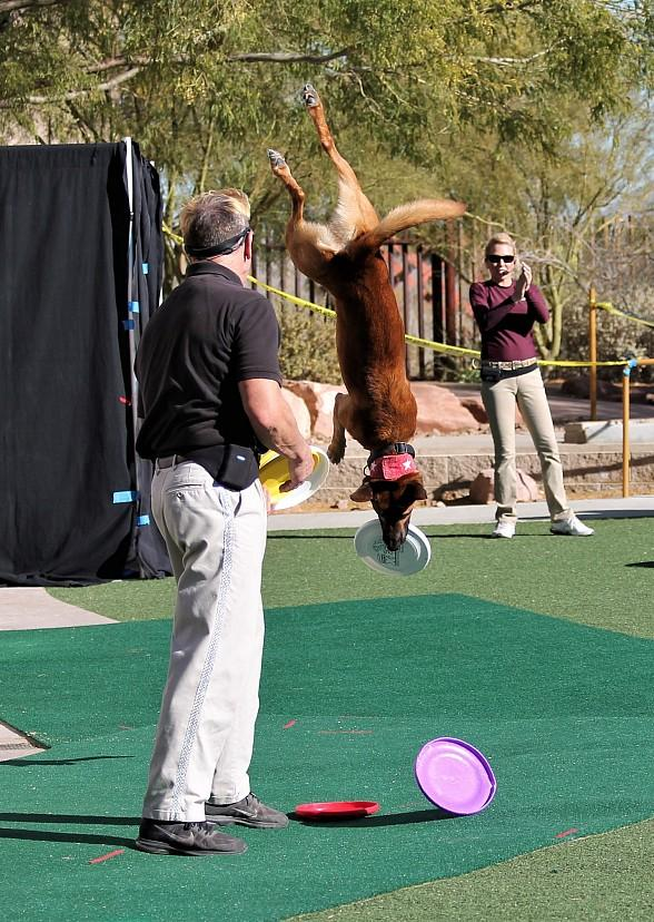"""See Amazing Tricks at Springs Preserve's """"Jump! the Ultimate Dog Show"""" with Shows Twice Daily on Weekends Through January 1, 2019"""