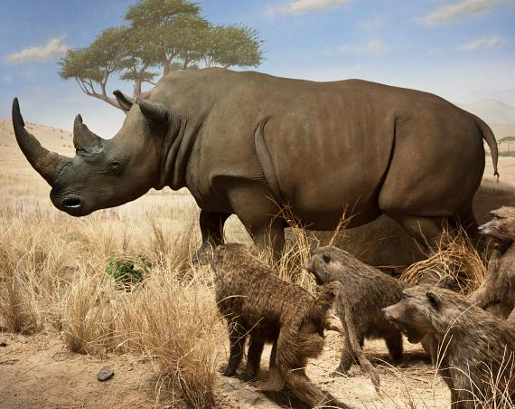 Las Vegas Natural History Museum to Unveil Updated African Savanna Exhibit Featuring Gary and Matthew Primm Family Wildlife Collection Pieces
