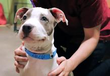 The+Source to Partner with The Animal Foundation to Host Pet Adoption Party in Celebration of National Dog Day August 26