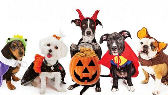 Bring Your Furrier Family Members to Pumpkin Paws at the Magical Forest Oct. 28