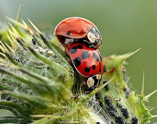How to Maintain Home Gardening Using Organic Pest Control