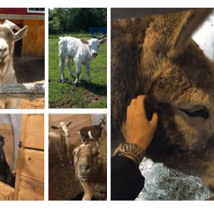 Visite du Big sky ranch animal sanctuary **COMPLET**