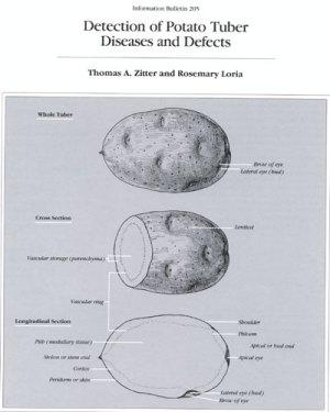 Potato Diagram