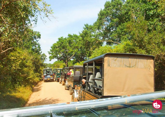 Jeep safari, Yala National Park
