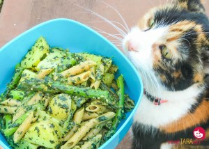 Pasta genovese with asparagus