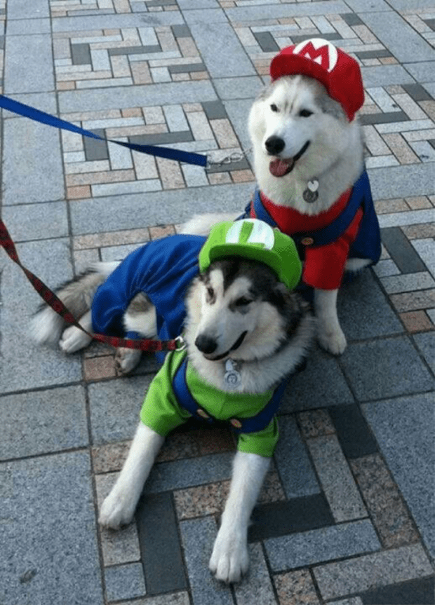 Top 10 Dog Costumes for 2014