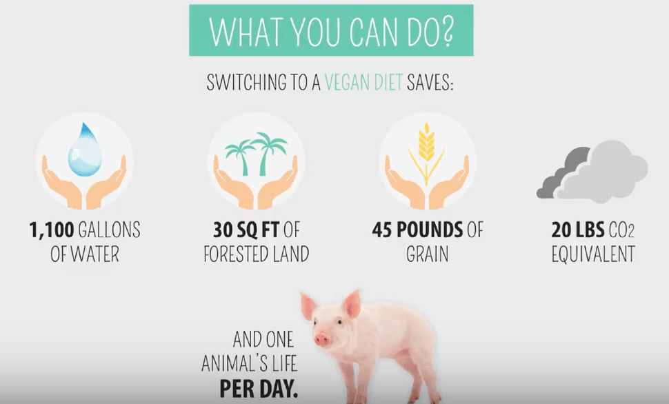 What you can do - follow a vegan diet.