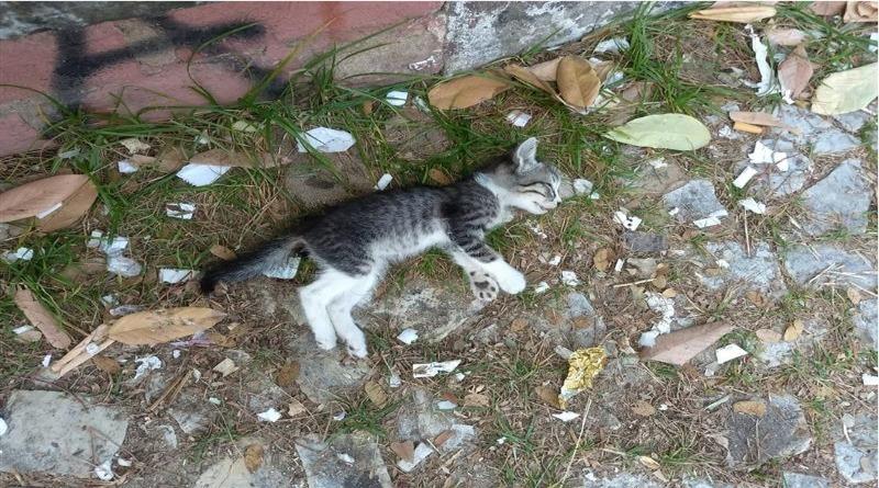 Gatos são envenenados e mortos em campus de universidade em Fortaleza