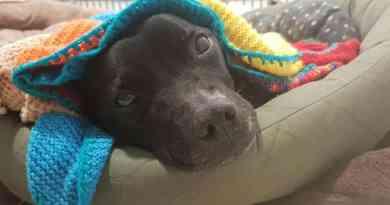 Idosa com 89 anos aquece cachorros em abrigo com seus cobertores