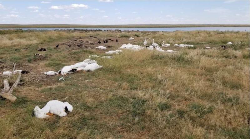 Milhares de pássaros morrem após tempestade de granizo