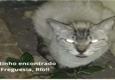 Gatinho encontrado na Freguesia, Rio de Janeiro