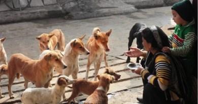 Experimento com cães de rua revela que eles nascem prontos para nos 'entender'