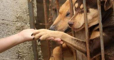 """A """"epidemia de abandono"""" dos animais de estimação cresce no Brasil"""