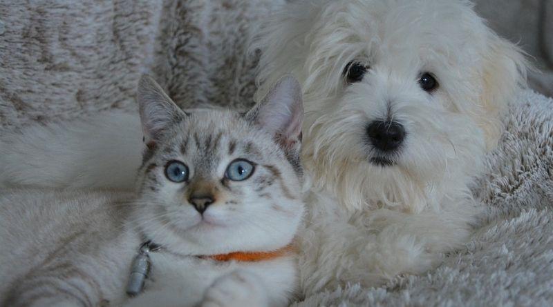 Presidente do Brasil sanciona lei com pena maior para maus-tratos contra cães ou gatos