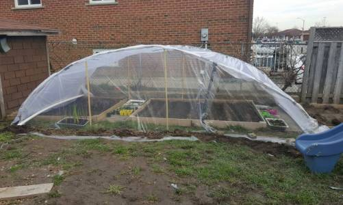 Here's my temporary polytunnel