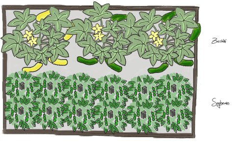 Raised Bed Plan – Spinach, Soybeans/Edamame Beans, Zucchini, Autumn Spinach