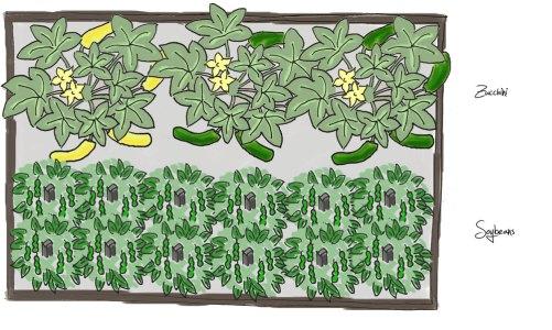 Raised Bed Plan – Spinach, Soybeans/Edamame Beans, Zucchini, Autumn Spinach