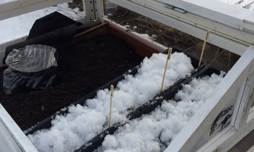 Preparing Grow Containers and Winter Sowing for early Spring Salad
