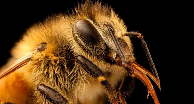 Comment l'IoT et les satellites pourraient sauver les abeilles – ZDNet France