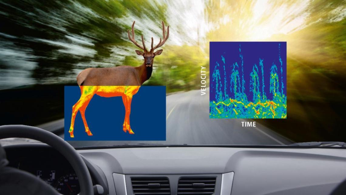 Le numériseur de Spectrum au service d'un radar routier détectant les animaux sauvages • Actutem – Actutem