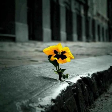 cropped-flower-in-concrete