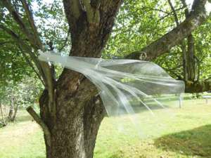 Fingertip sheer bridal veil