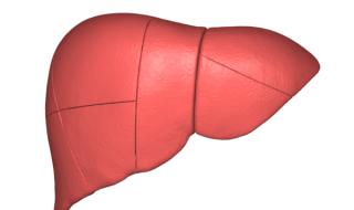 черен дроб