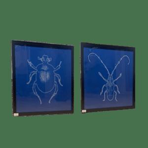 Cyano Bug