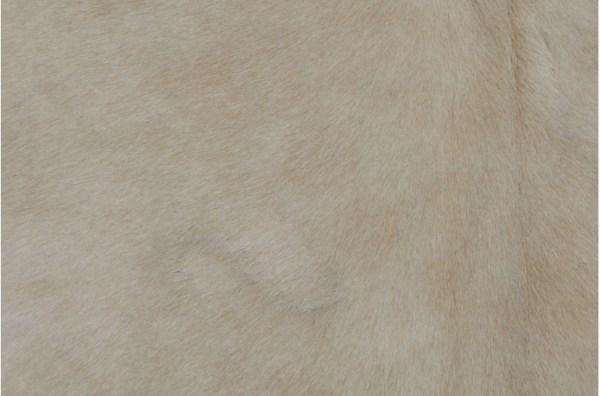 Lekure antilope
