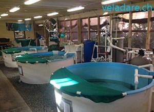 Schildkröte Spital in Jeckyll Island