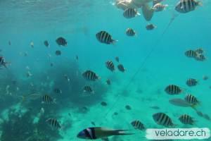 Seaquarium, Exumas, Bahamas