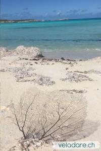 Corail sur la plage de Jumentos Cays, Bahamas