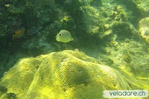 Unterwasserwelt, San Blas, Panama