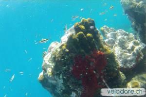 Monde sous marin des Lemmon Cays, San Blas