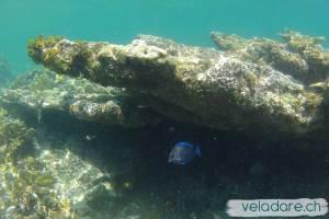 monde sous-marin des Holandes Cays, San Blas, Panama