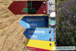panneau du sentier du vin de Weinfelden