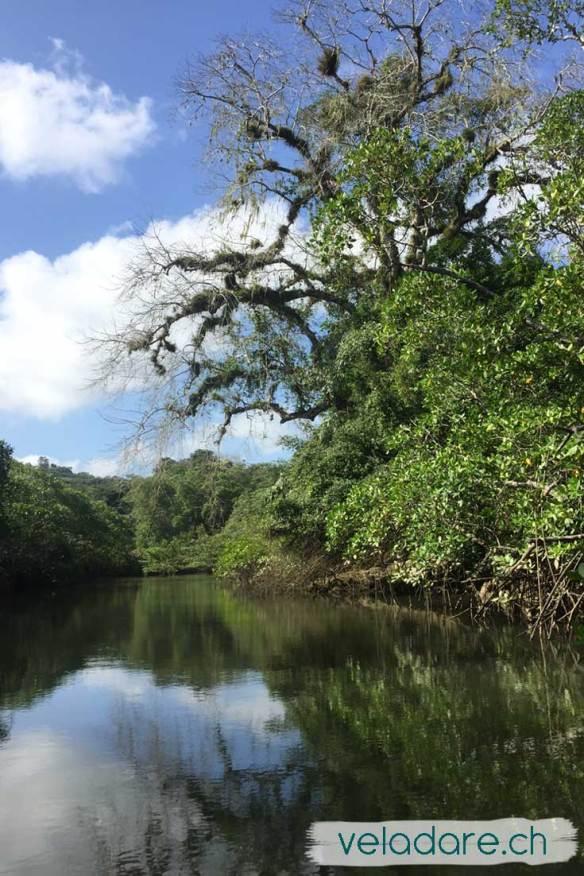 Mangrove près de Espiritu Santo, Las Perlas, Panama